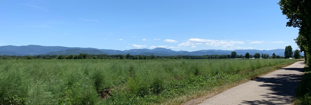 Panoramic view of the mountains of the Black Forest with the twin-peaks of The Belchen in the middle. A bike-path approaches from the corner.