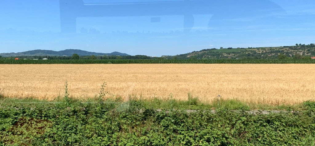 Panoramic view of a wheat field at the base of the Kaiserstuhl mountain in Germany. The hills in the background are lined by terraced vineyards and the peak of the Kaisterstuhl itself is made visible by the memorable shape of the radio tower at the top.